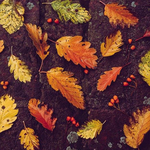 23. září - první podzimní den a potřebná imunita